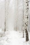Mañana en la madera del invierno Fotos de archivo