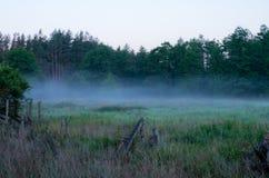 Mañana en la niebla del bosque de la mañana del bosque Imagen de archivo libre de regalías