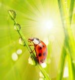 Mañana en naturaleza Imagen de archivo libre de regalías