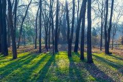 Mañana en parque Imagen de archivo libre de regalías