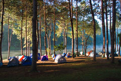 Mañana en parque que acampa Imagen de archivo