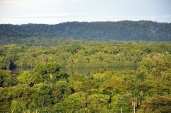 Mañana en selva tropical Foto de archivo libre de regalías