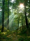 Mañana en un bosque verde fotos de archivo