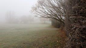 Mañana escarchada de la niebla en parque Foto de archivo libre de regalías