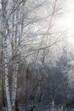 Mañana escarchada del invierno Imagen de archivo libre de regalías