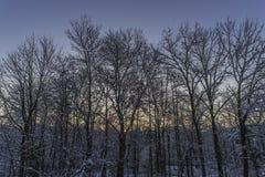 Mañana escarchada del invierno con bosque nevoso en el amanecer fotos de archivo libres de regalías
