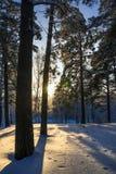 Mañana escarchada del invierno en la costa del río siberiano Fotografía de archivo