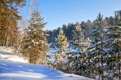 Mañana escarchada del invierno en la costa del río siberiano Fotos de archivo libres de regalías