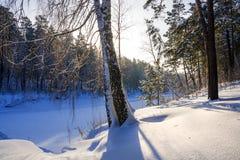Mañana escarchada del invierno en la costa del río siberiano Imagen de archivo libre de regalías