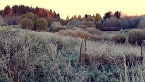 Mañana escarchada del otoño en naturaleza, todo se cubre con helada metrajes