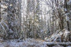 Mañana escarchada en el bosque fotos de archivo libres de regalías