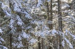 Mañana escarchada en el bosque imágenes de archivo libres de regalías