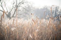 Mañana escarchada en el bosque Imagenes de archivo