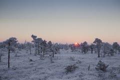 Mañana escarchada en el paisaje del bosque con las plantas, los árboles y el agua congelados fotografía de archivo