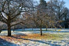 Mañana escarchada en el parque Fotografía de archivo libre de regalías