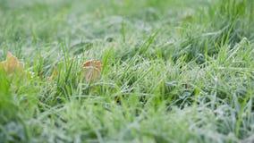 Mañana escarchada en otoño, movimiento de la cacerola de la hierba helada almacen de video