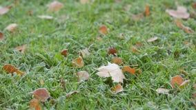Mañana escarchada en otoño, movimiento de la cacerola de la hierba helada almacen de metraje de vídeo