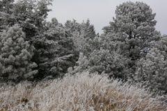 Mañana escarchada en Rocky Mountains imagenes de archivo