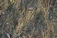 Mañana escarchada. Hojas e hierba congeladas. fotografía de archivo