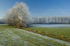 Mañana fría Foto de archivo