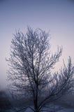Mañana fría Imágenes de archivo libres de regalías