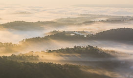Mañana hermosa con rayo solar a través de los árboles foto de archivo