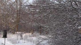 Mañana hermosa del invierno metrajes