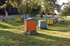 Mañana hermosa del verano en colmenar viejo del jardín de la granja con la colmena Fotos de archivo libres de regalías