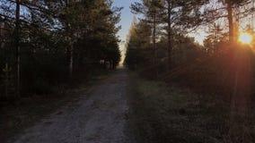 Mañana hermosa en bosque del pantano con salida del sol bosque de la P.M. con salida del sol Imágenes de archivo libres de regalías