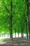 Mañana hermosa en el parque Imagen de archivo libre de regalías