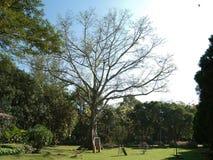 Mañana hermosa en parque público Fotos de archivo libres de regalías