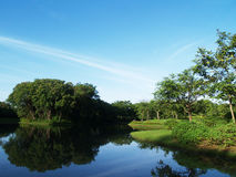 Mañana hermosa en parque público con el campo de hierba verde Foto de archivo libre de regalías