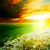 Mañana ligera brillante en las colinas verdes Fotos de archivo libres de regalías