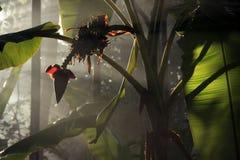Mañana light-02 Imagenes de archivo