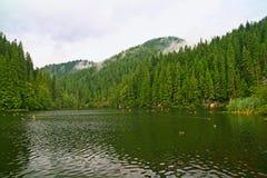 Mañana lluviosa en el lago hermoso del bosque fotos de archivo