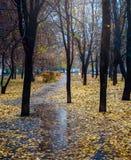 Mañana lluviosa en el parque Imágenes de archivo libres de regalías