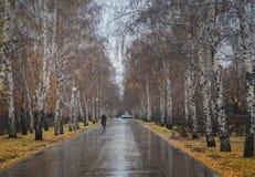 Mañana lluviosa en el parque Foto de archivo libre de regalías