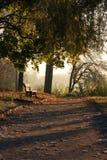 Mañana misteriosa en el parque Fotografía de archivo libre de regalías