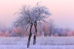 Mañana muy fría del invierno en Lituania, alrededor - 24 grados de frío 2016-01-08 Fotos de archivo