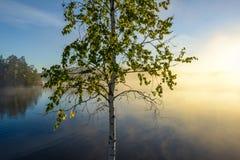 Mañana nebulosa por el lago Fotografía de archivo libre de regalías