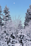 Mañana Nevado Imagen de archivo libre de regalías
