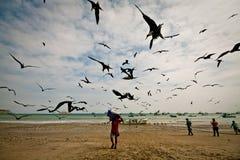 Mañana ocupada con los pájaros de fragata atraídos por Fotos de archivo libres de regalías