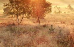 Mañana que brilla intensamente del oro en prado del otoño Fotografía de archivo libre de regalías
