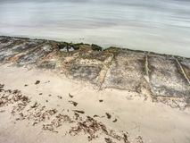 Mañana romántica Dobló el árbol sobre el mar foto de archivo