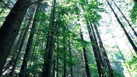 Mañana soleada asombrosa en el bosque profundo de la montaña de montañas cárpatas Opinión granangular de la toma panorámica almacen de video