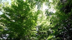 Mañana soleada asombrosa en el bosque profundo de la montaña de montañas cárpatas Vídeo granangular de la toma panorámica metrajes
