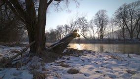 Mañana soleada con salida del sol sobre árboles en el tiro del carro de la orilla del río metrajes
