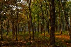 Mañana soleada del invierno en bosque denso Foto de archivo