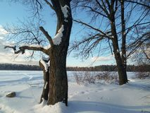Mañana soleada del invierno en campo nevado Fotografía de archivo