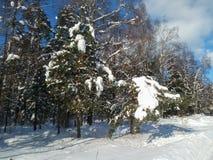 Mañana soleada del invierno en campo nevado Fotos de archivo libres de regalías